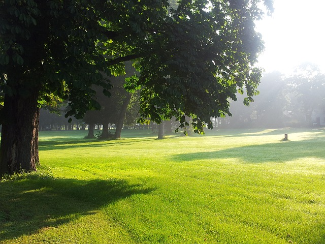 Morning Park Early 183 Free Photo On Pixabay