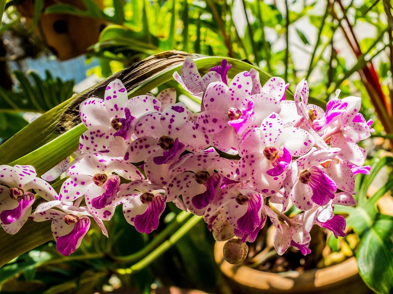 обычные годы фото всех цветов орхидеи который приобретаем договоренности