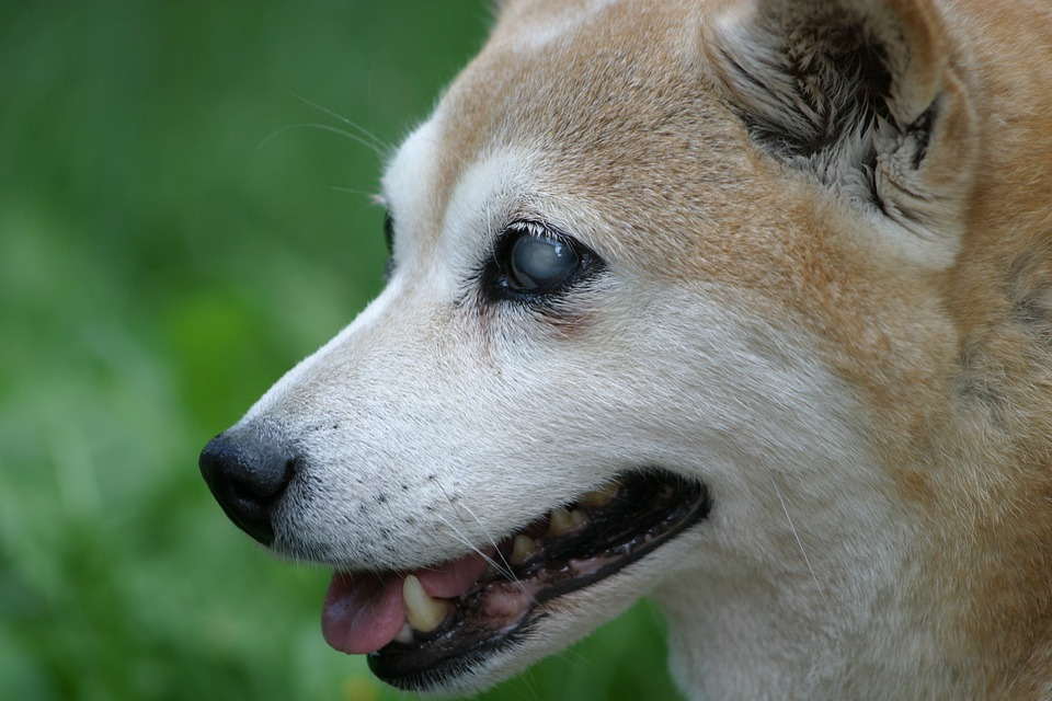 What Can I Do If My Dog Is Going Blind