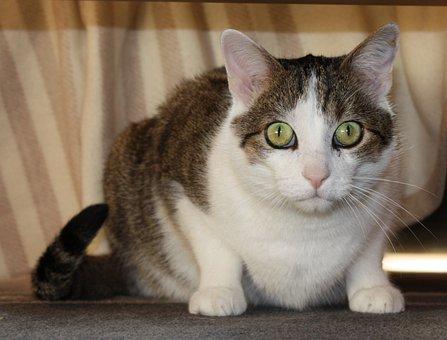 国内の猫, ネコ, 目が覚める