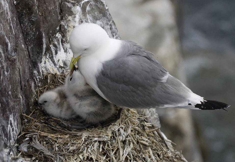 鳥の巣 鳥 雛 · Pixabayの無料写...