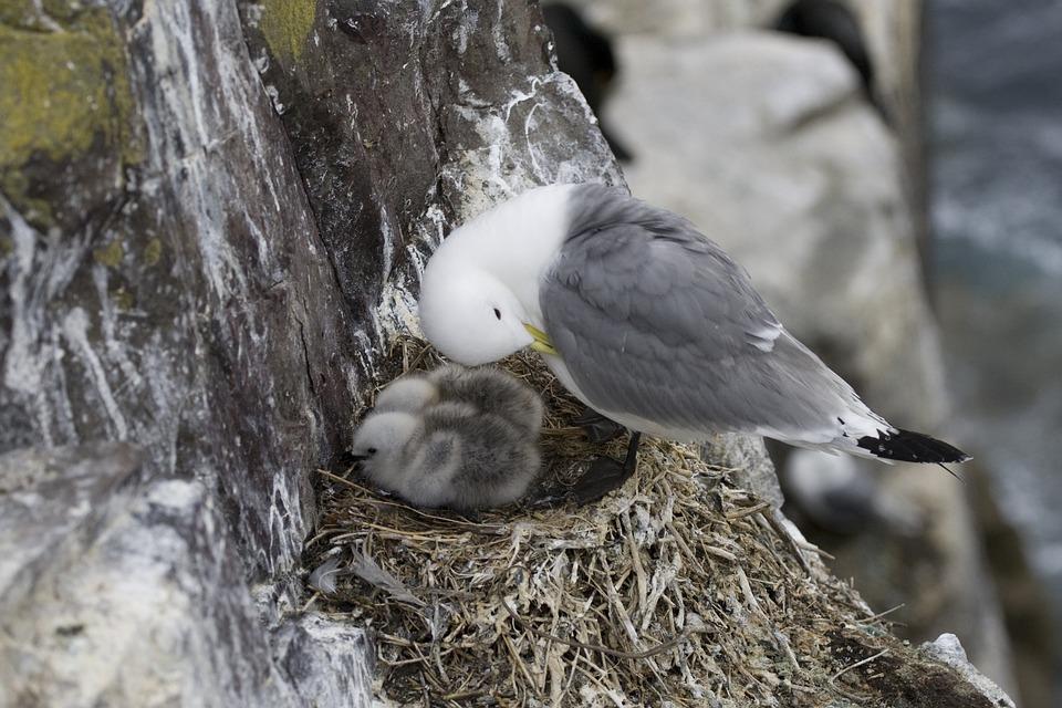 Seagull Gull Bird - Free photo on Pixabay