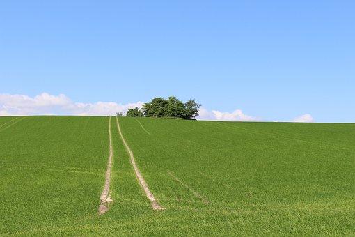 Field, Fields, Denmark, Countryside