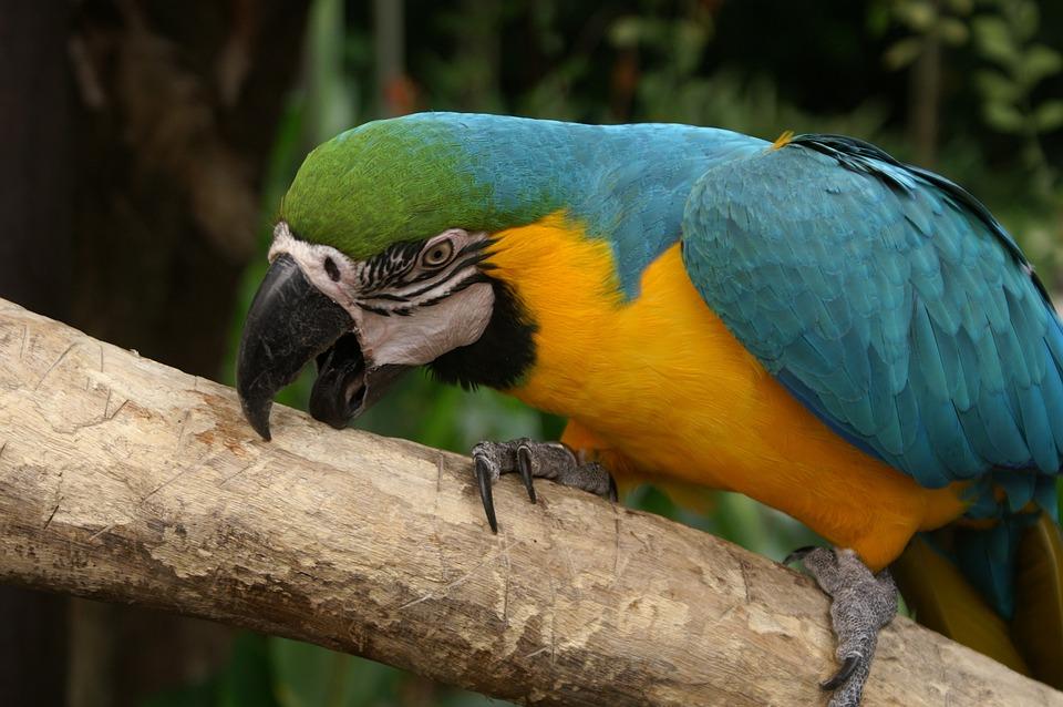 το πουλί σας είναι πολύ μεγάλα βίντεοξανθιά διπλή πίπα