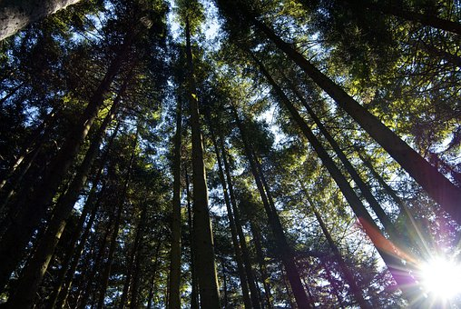 Forests, Trees, Woods, Thick, Dense