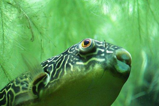 Fish Ocean Underwater Swim Aquarium W