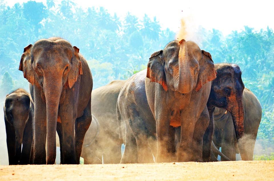 Elefanti bagno di sole giocando · foto gratis su pixabay