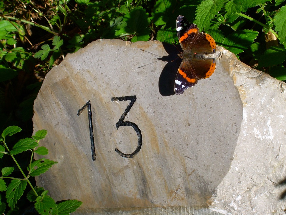 Thirteen, Butterfly, Milestone, Summer, Earth