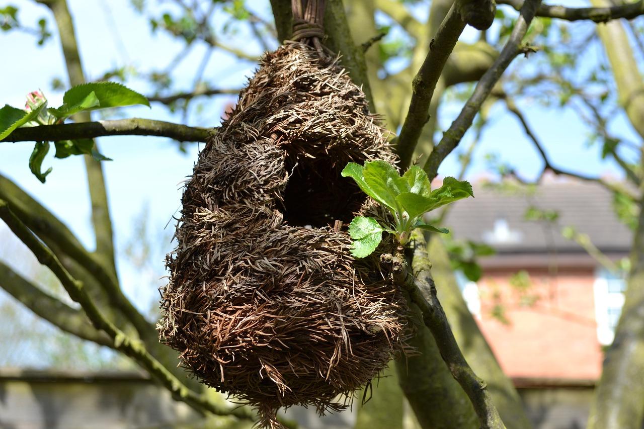 фото картинки гнезда птиц мастеров появляется