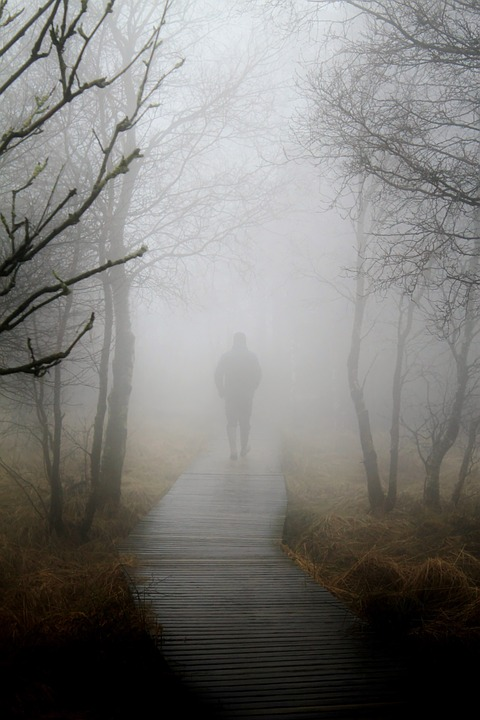 fog autumn nature  u00b7 free photo on pixabay