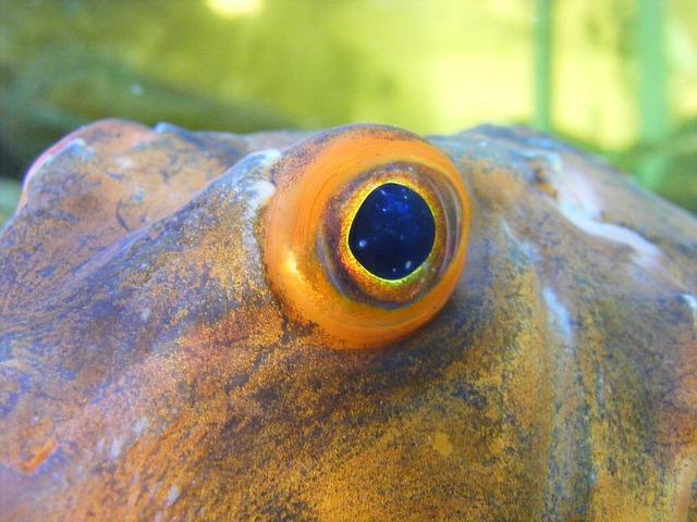 Free photo fish eye watch fish eye reptile free for What fish has eyelids