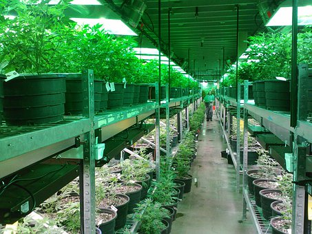 4 Ways Technology is Shaping Cannabis Growing Process 3