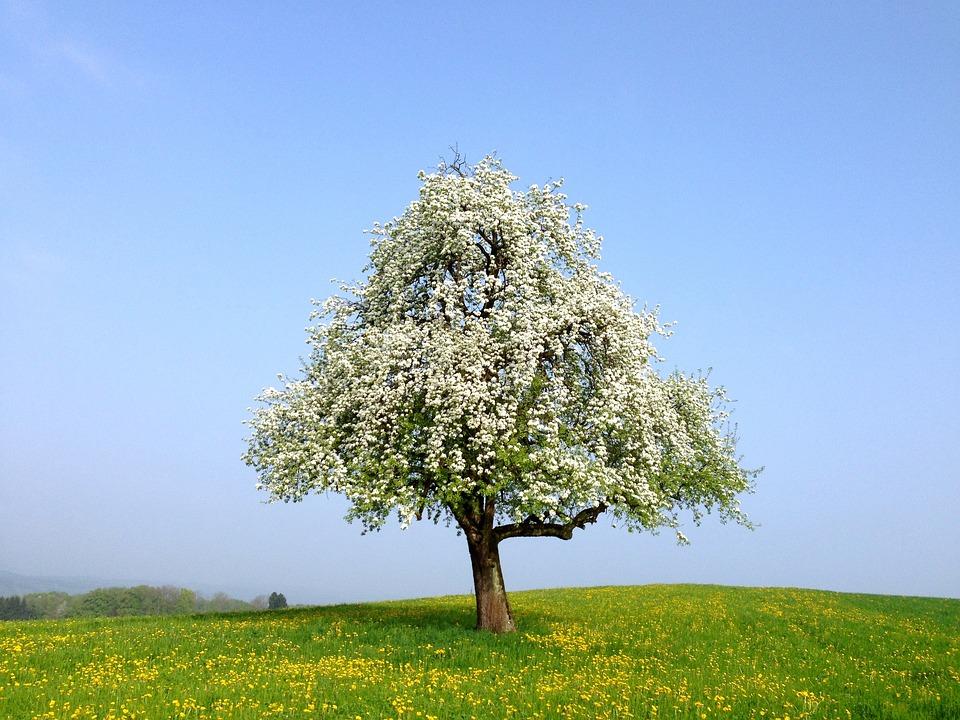 Frühling Blüten Baum Weiße · Kostenloses Foto auf Pixabay