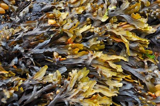 Algues Plage Algues Sur La Plage Algues Al