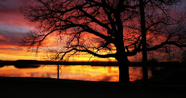 Trees Silhouette Sunset Free photo: Sunsets, S...