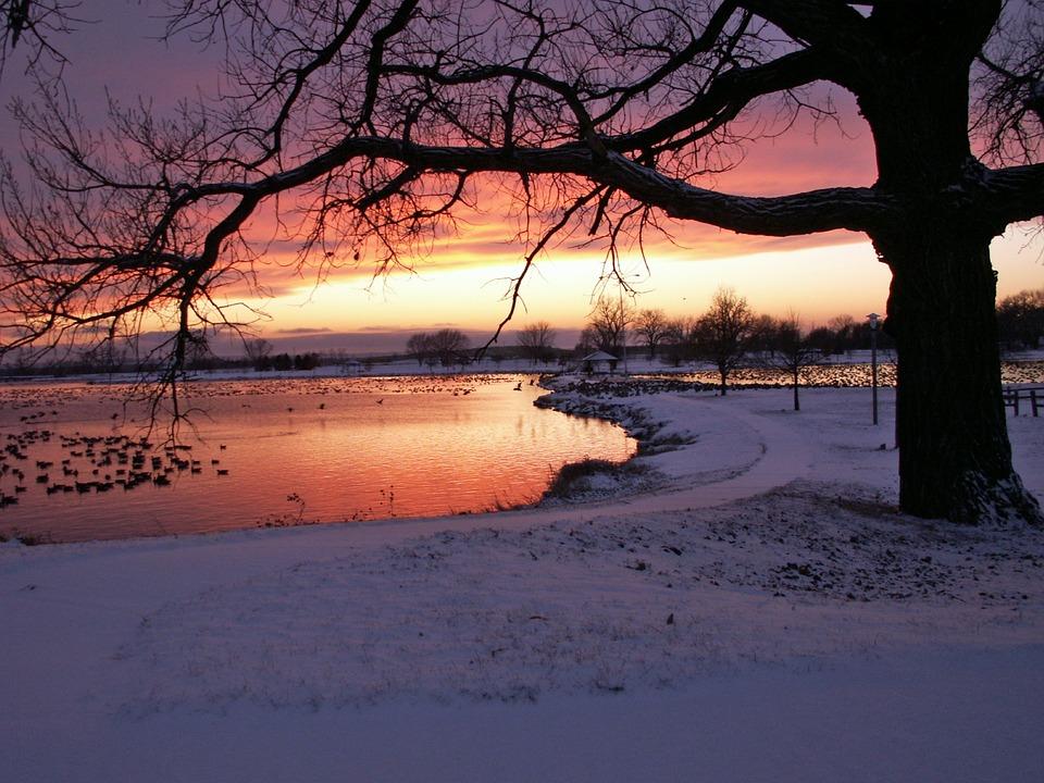 Vinter, Snedækket, Træer, Skov, Vand, Solnedgang