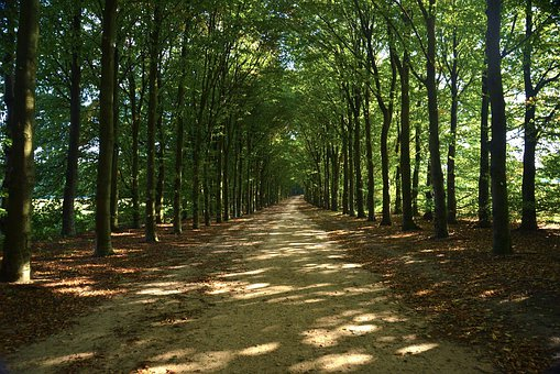 Trees, Greenery, Forests, Parks, Paths