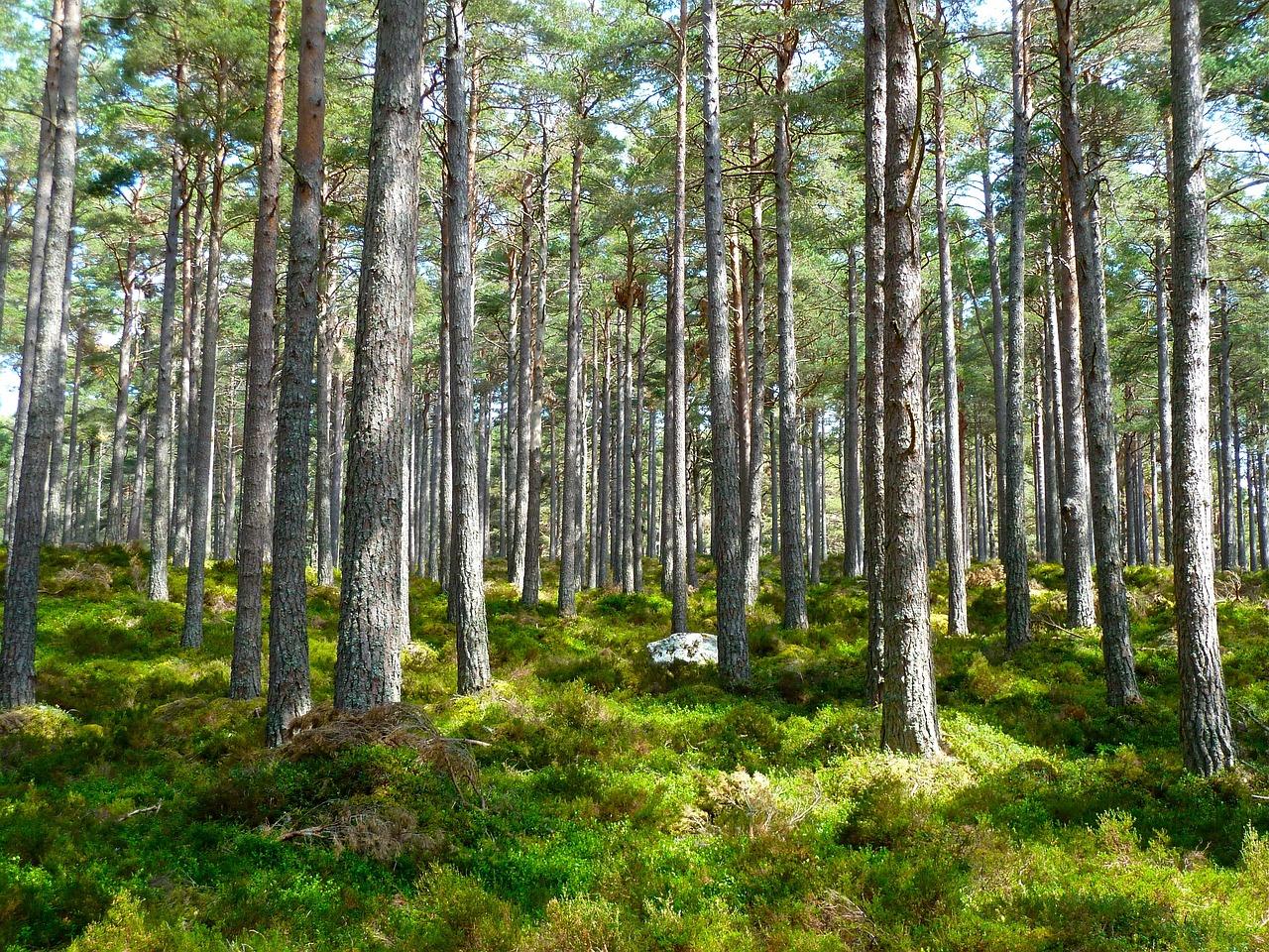 этом ключе деревья леса нижегородской области фото важное напоминания, что