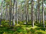 las, drzewa, ekologia