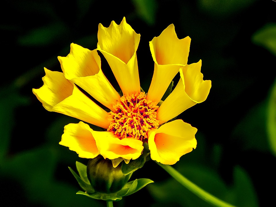 Flower yellow summer free photo on pixabay flower yellow summer blossom mightylinksfo