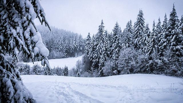 winter wald schneebedeckt kostenloses foto auf pixabay. Black Bedroom Furniture Sets. Home Design Ideas