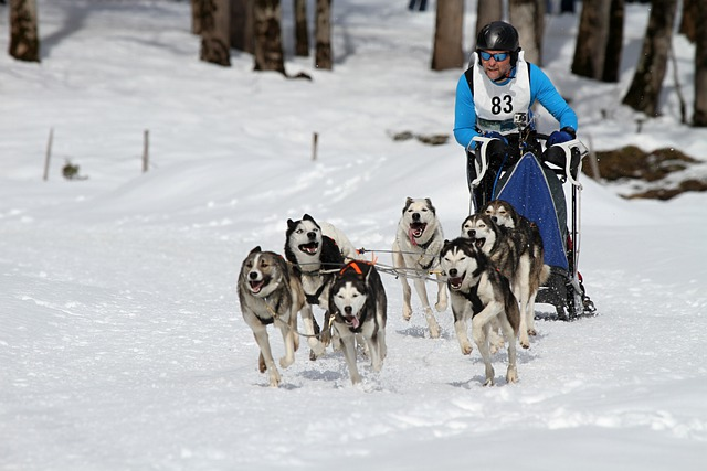 Can Am Sled Dog Race  Results