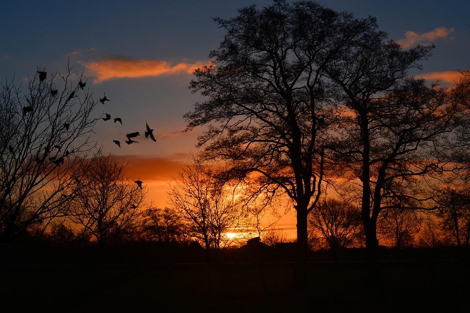 Free photo: Sunrise, Morgenrot, Skies, Bird - Free Image on ...   title   www.sunrise.com
