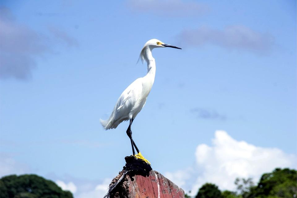 Hegre White Fuglen · Gratis foto på Pixabay