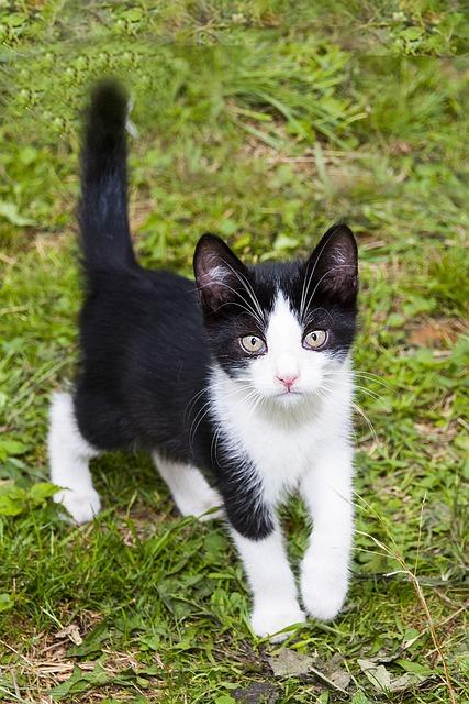 Download 76+  Gambar Kucing Warna Hitam Putih Terbaru HD