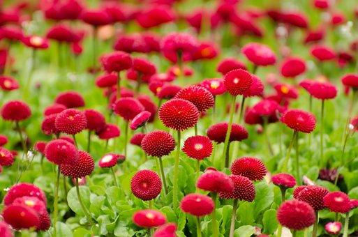 Flower, Red, Summer, Spring, Gardening