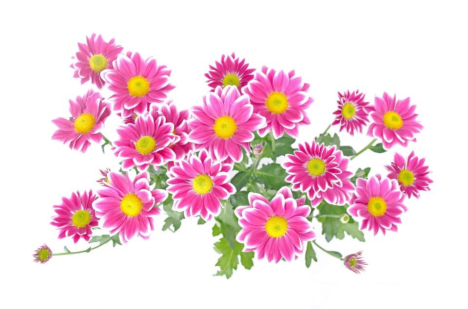 Gambar Ilustrasi Tanaman Bunga Bunga Tanaman Gambar Gratis Di Pixabay