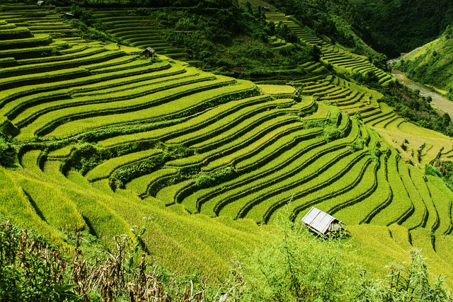 Free photo rice terraces rice fields free image on for What are terraces