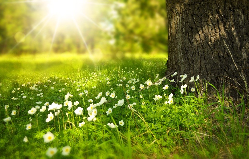 Spring, Tree, Flowers, Meadow, Tree Trunk, Sunlight