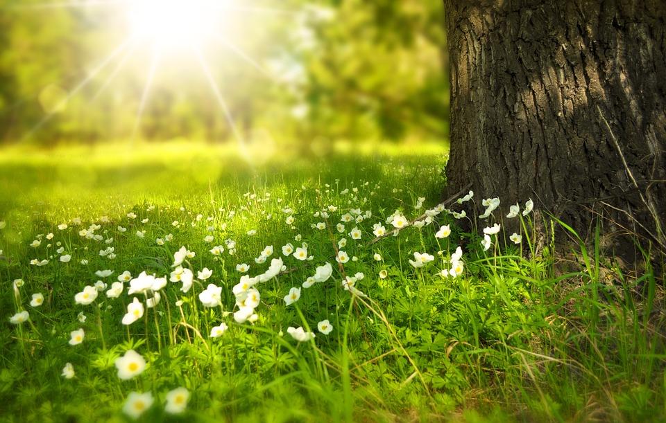Pohon, Bunga Bunga, Padang Rumput, Batang Pohon