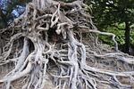 root, tree, environment