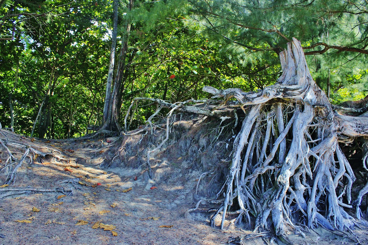 Деревья с корнями фото
