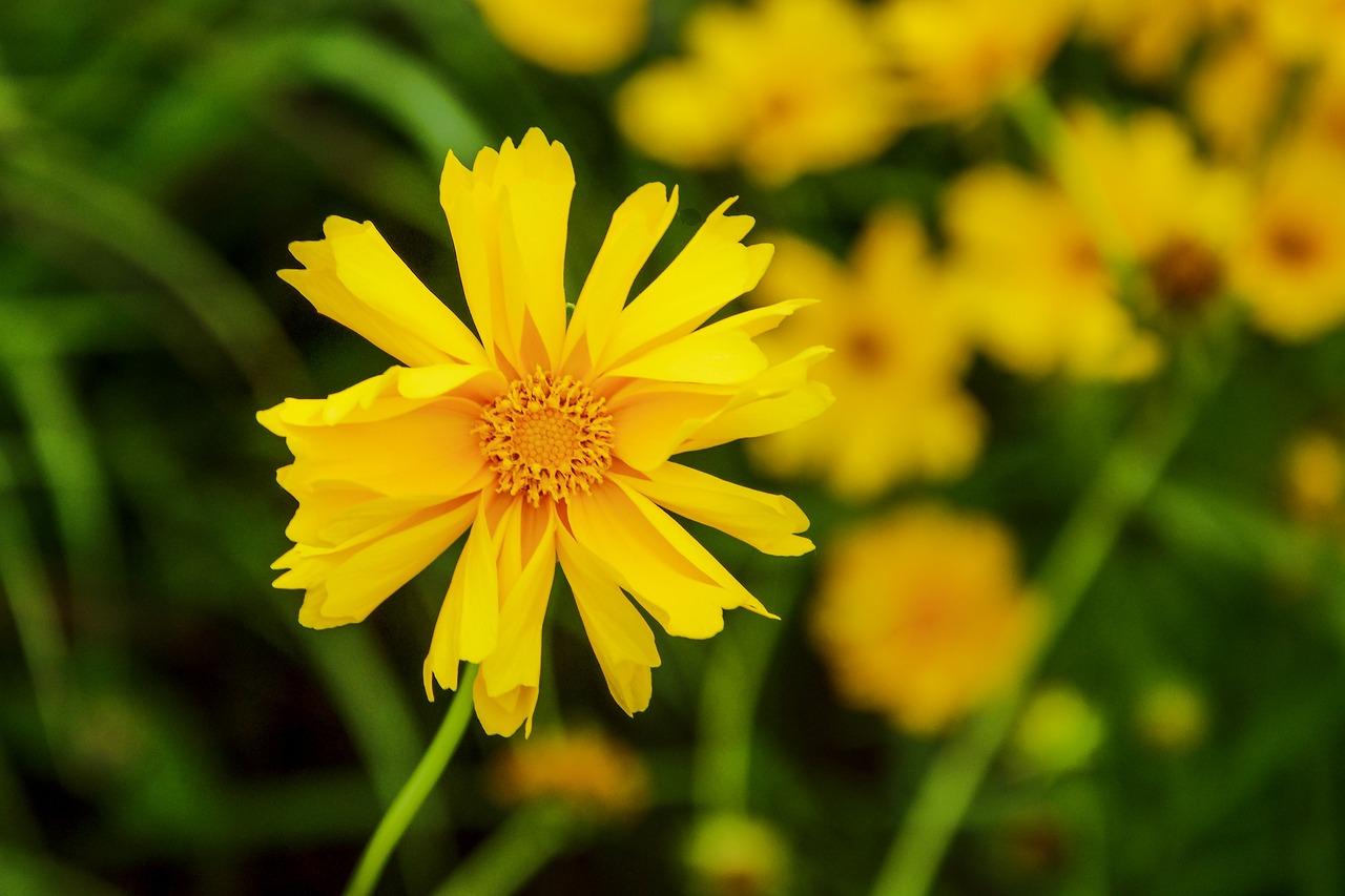 желтые цветы фото с названиями полевые хладнокровны