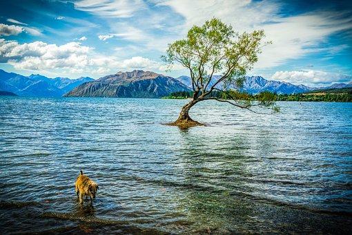 Wanaka, Nueva Zelanda, Lago Wanaka