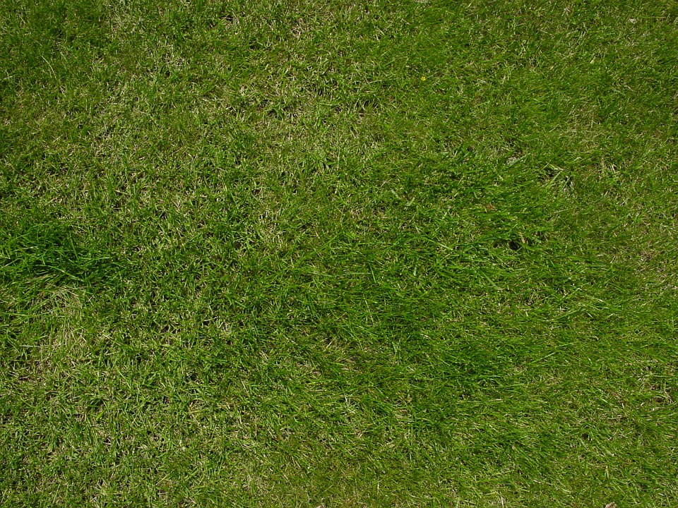 Free Photo Lawn Grass Green Nature Free Image On