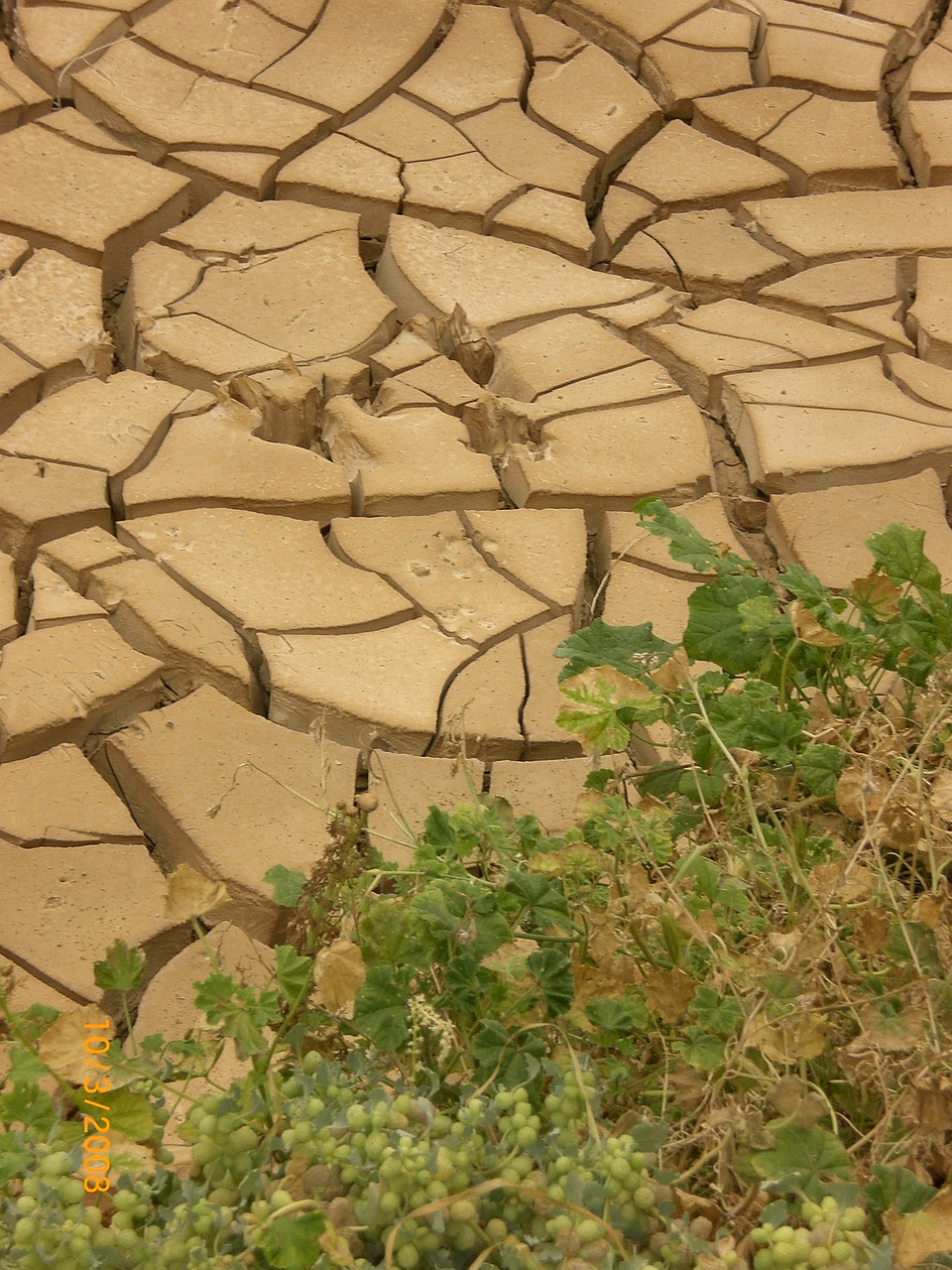 drought dehydration of a nation