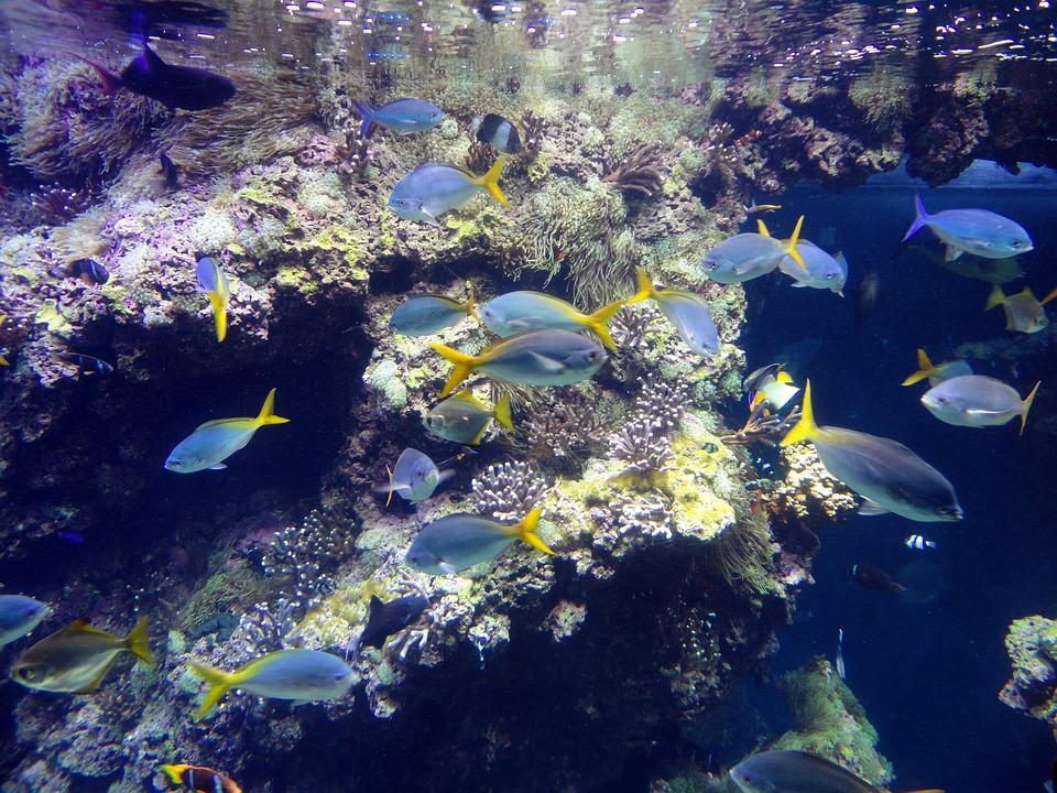 Fische, Unterwasserwelt