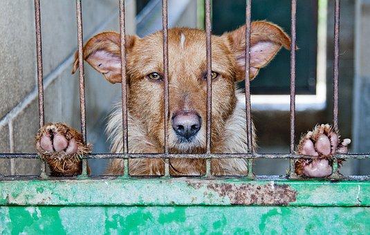 Caged, Cão, Abandonados, Triste, Animal