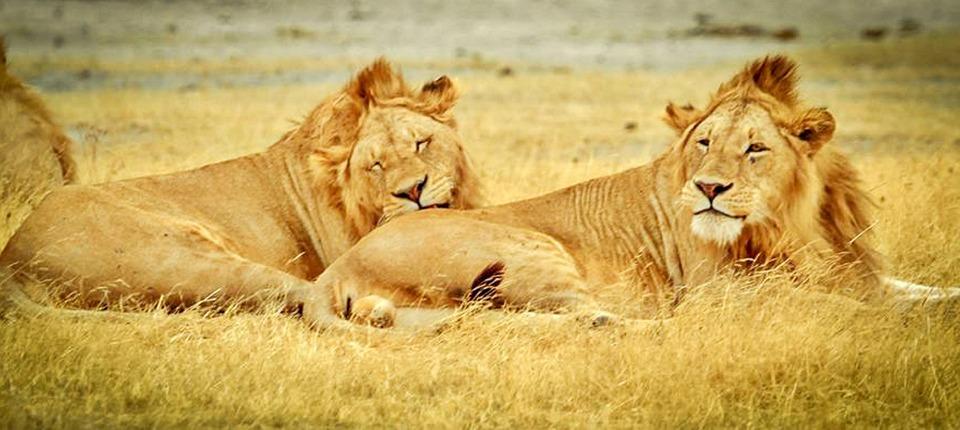 Kostenloses Foto Tansania Serengeti Nationalpark Kostenloses Bild Auf Pixabay 280340