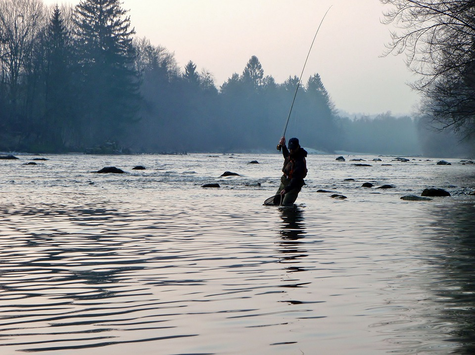 Free photo: Trout, Fish, Grunge, Fly Fishing - Free Image on ...