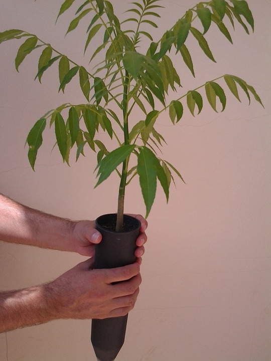 Seedlings, Plants, Trees