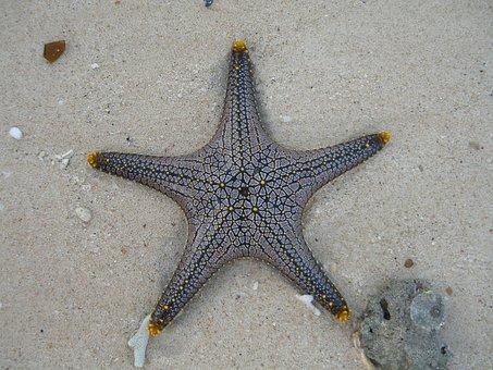 Starfish, Marine Life, Public Record