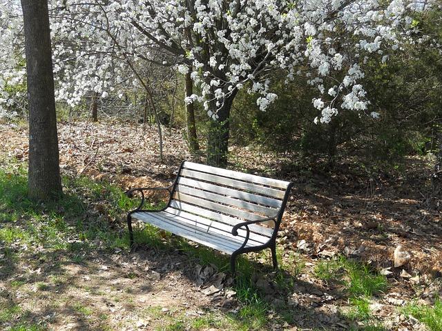 Foto gratis banco natureza banco do parque imagem for Sillas para parques