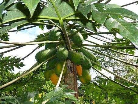 papaya-282980__340.jpg