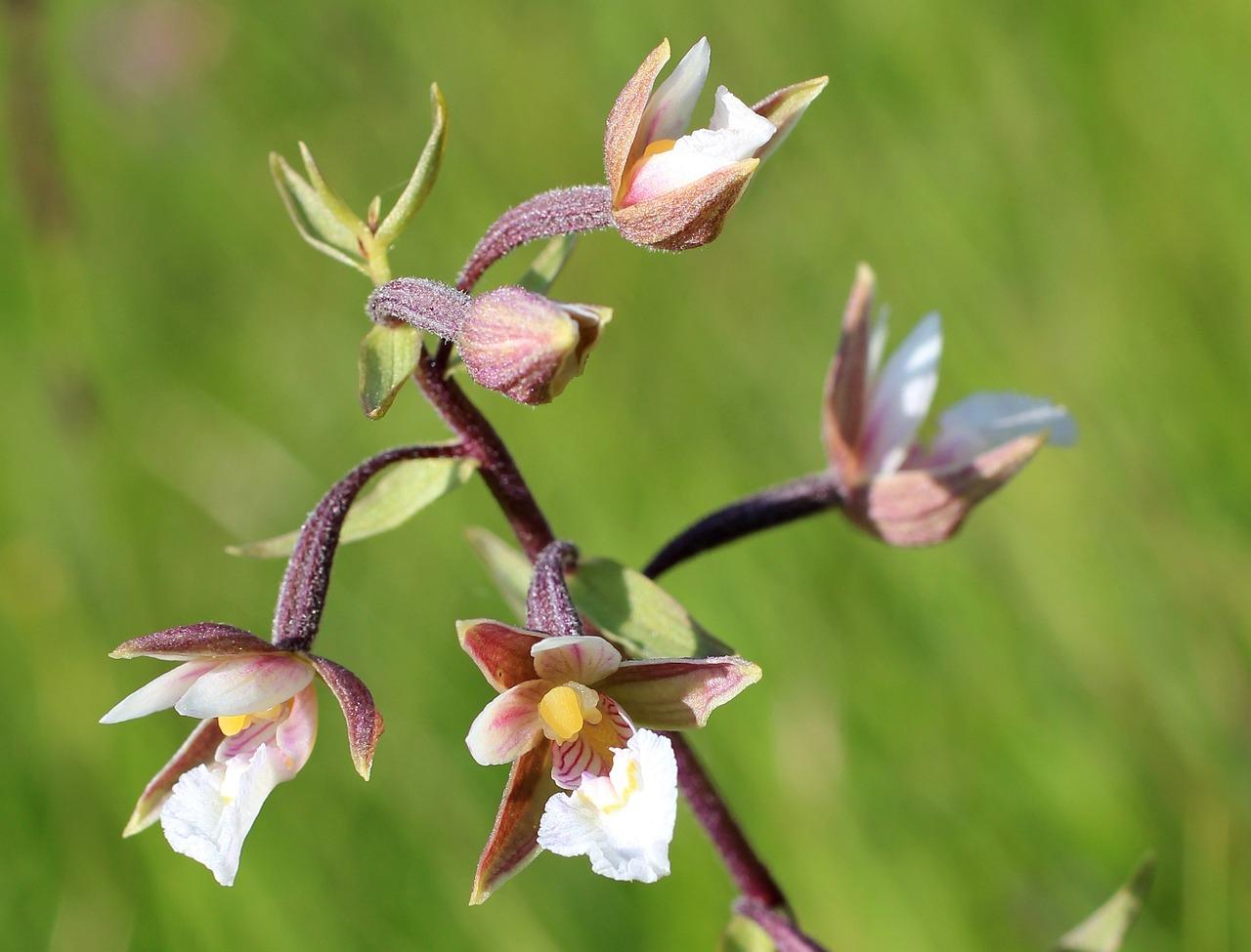 《沼泽里的兰花》司溟 沼泽里的兰花免费全文
