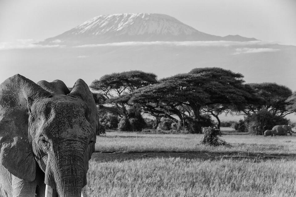 Kilimandjaro afrique l phant de photo gratuite sur pixabay - Photos d elephants gratuites ...